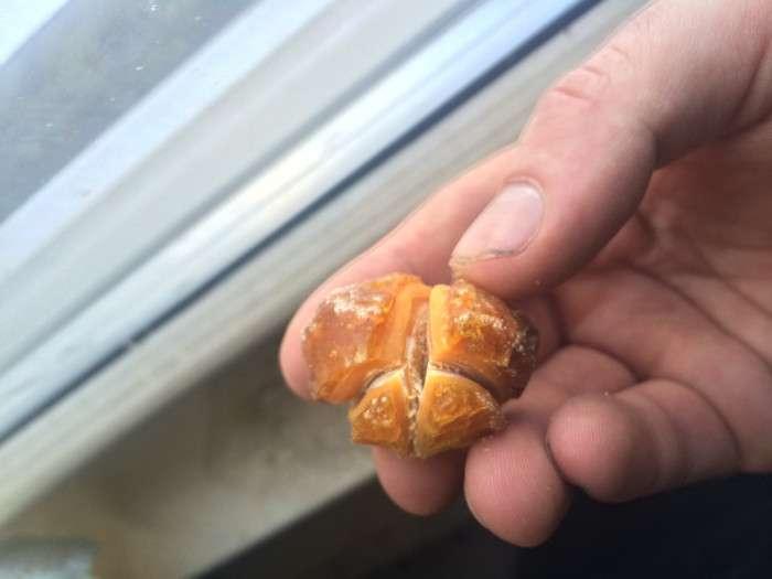 Пасхальне яйце, яке 25 років пролежало в холодильнику (5 фото)