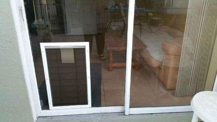 Собака і розсувні двері (3 фото)