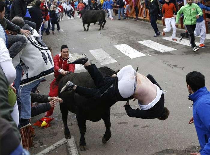 Невдале участь в забігу биків (5 фото)