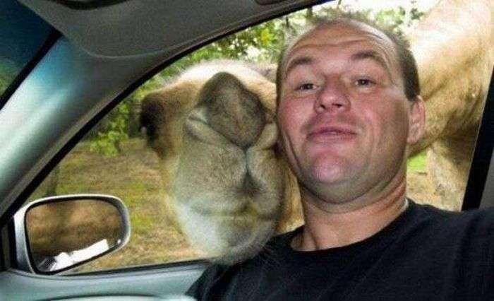 Кращі селфи з участю людей і тварин (20 фото)