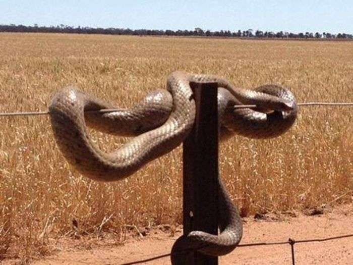 Екзотичний тваринний світ Австралії (22 фото)
