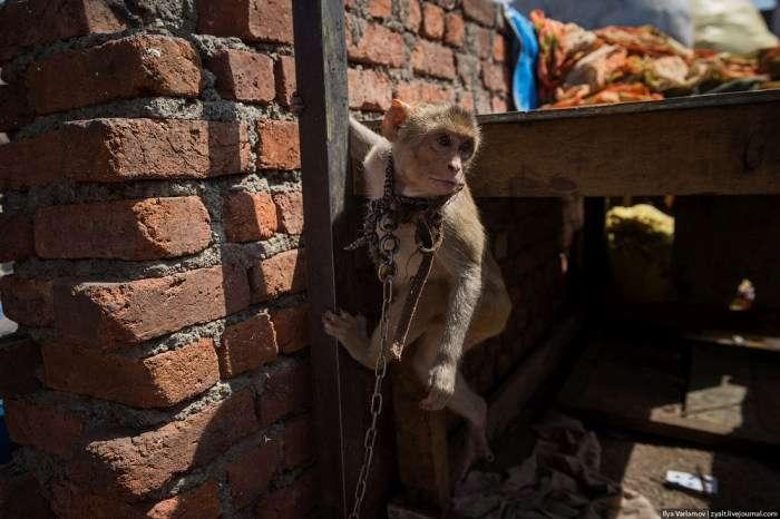 Як влаштоване життя в нетрях Мумбая – Дхараві (51 фото)