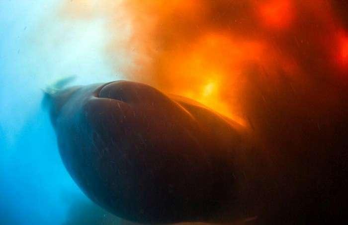 Кашалот «забруднив» дайверів (7 фото)