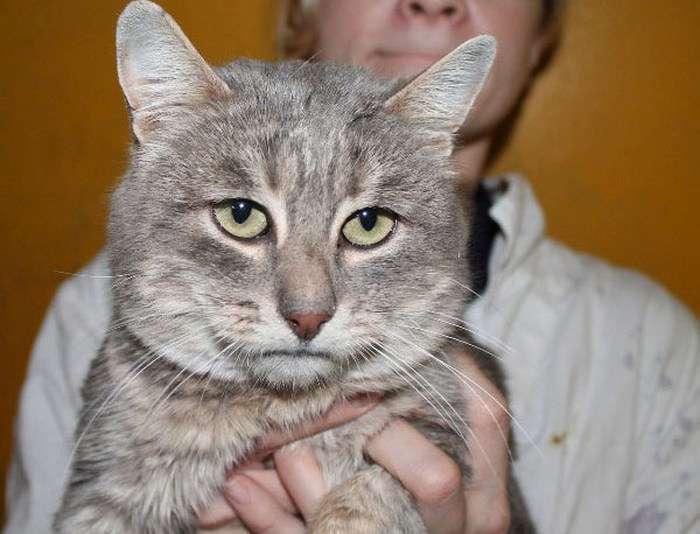 Грустящий кіт з людським обличчям (4 фото)