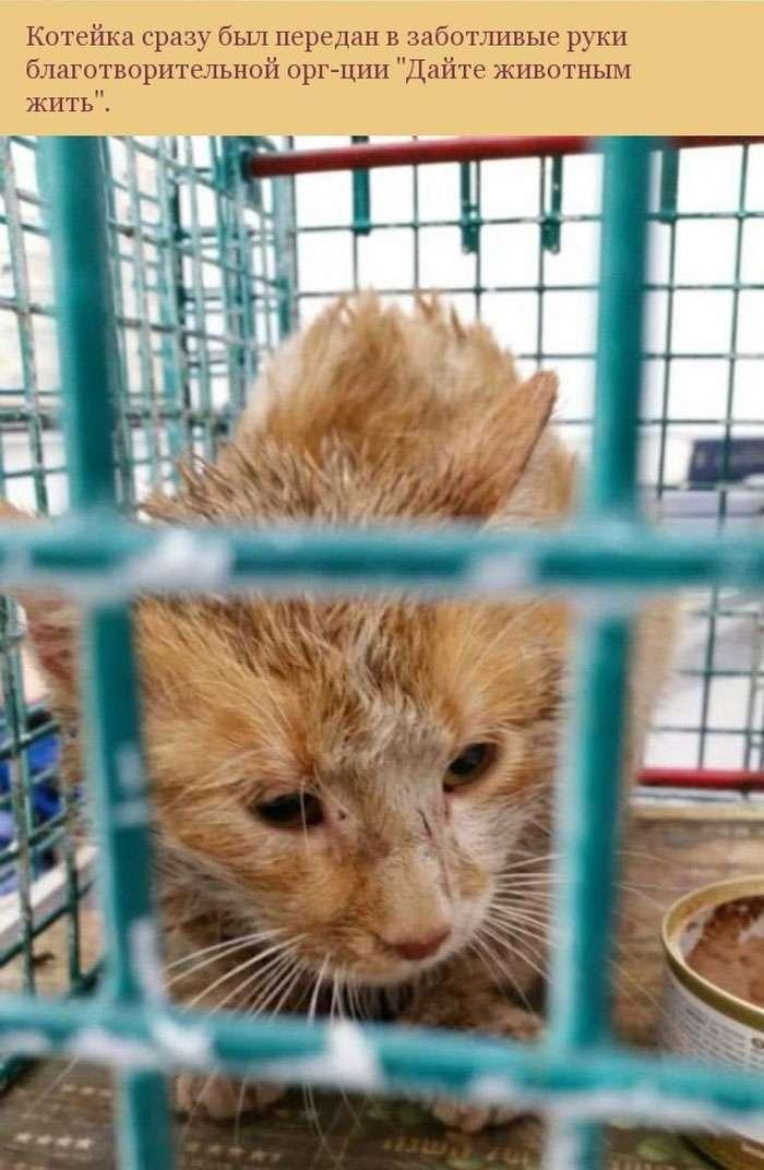 Порятунок кішки, що застрягла в трубі (10 фото)