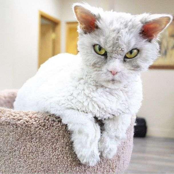 Альберт – найсуворіший кіт у світі (20 фото)