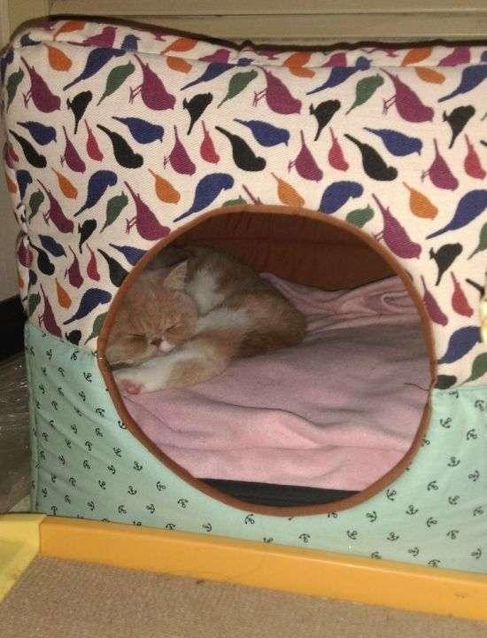 Порятунок дівчини, що застрягла в котячому будиночку (6 фото)