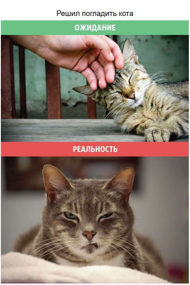 Кішки: очікування і реальність (10 фото)