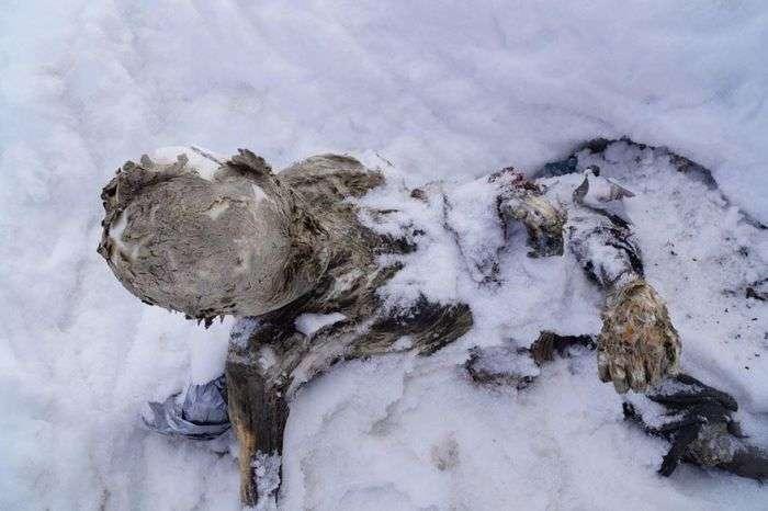 У Мексиці виявлено мумії альпіністів, зниклих без вести 55 років тому (10 фото)