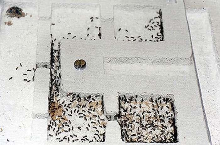 Мурашина колонія у власному будинку (13 фото)