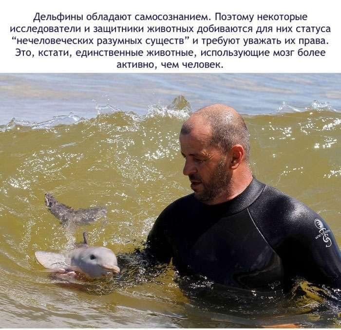 Цікаві факти про дельфінів (16 фото)