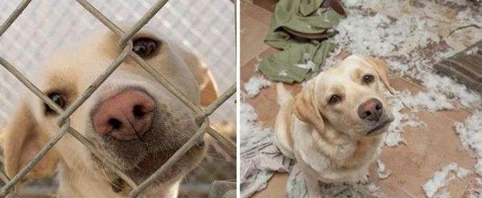 Тварини в притулку і в сімї: фото до і після (16 фото)