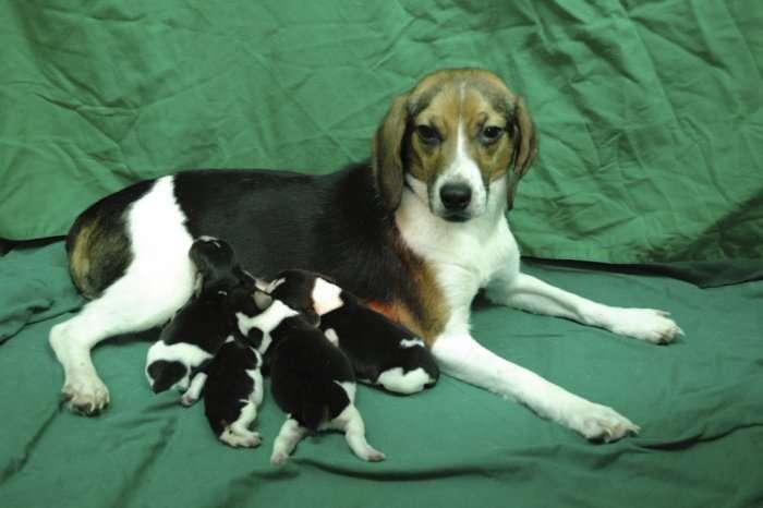 Генетично модифіковані тварини (12 фото)