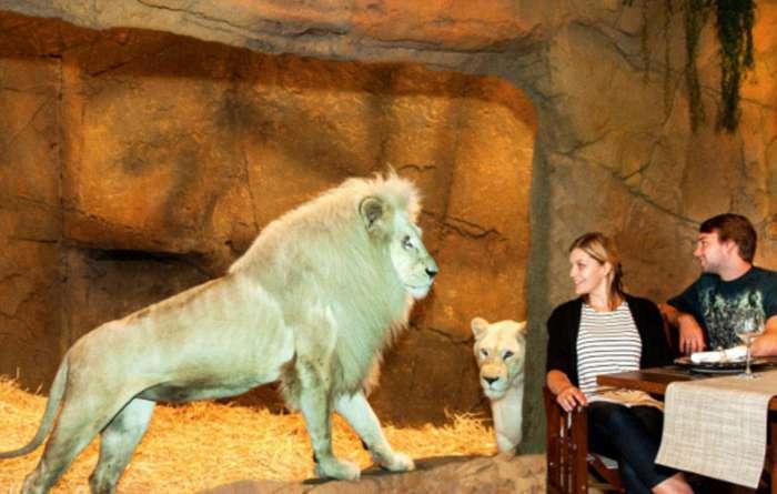 Незвичайний готель в австралійському зоопарку (8 фото)