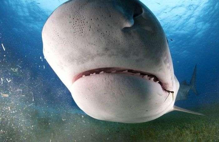 Що бачить жертва акули в останні секунди життя (11 фото)