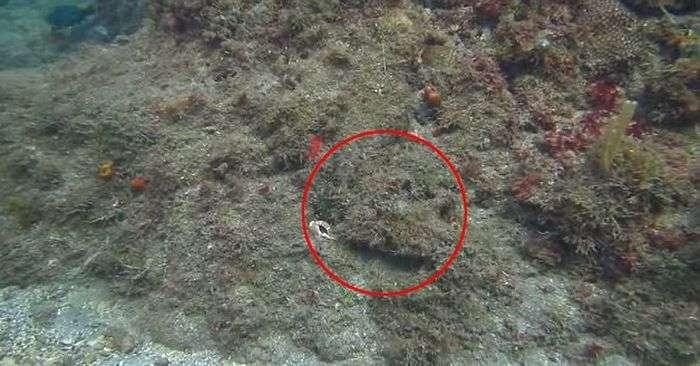 Дайвер випадково змусив восьминога покинути свій притулок (5 фото + відео)