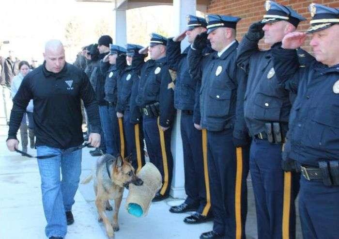 Американські поліцейські провели в останню путь свого чотириногого колегу (5 фото)