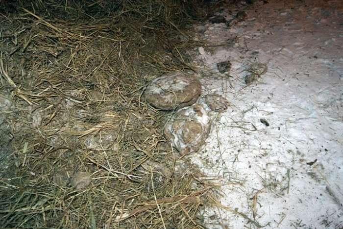 У Куйбишеві молодий фермер висипав гній біля входу у відділення Ощадбанку (4 фото)