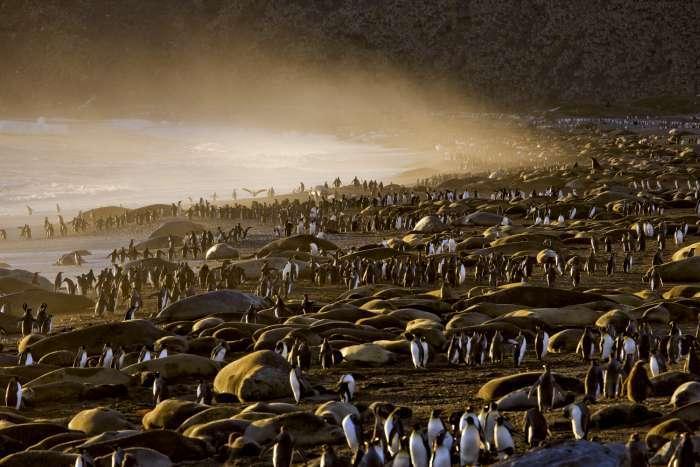 Дивовижні фотографії дикої природи від Підлоги Никлена (33 фото)