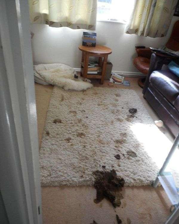 В будинок пенсіонерки навідалися непрохані гості (9 фото)
