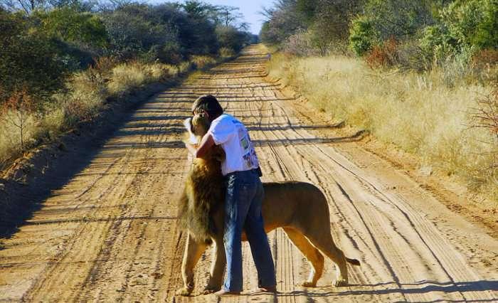 У Південній Африці чоловік замінив леву мати (11 фото)