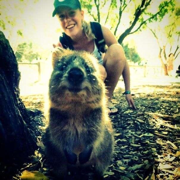 Квокка – тварина, яке прикрасить будь селфи (25 фото)