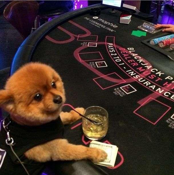 Як живуть собаки багатих господарів (32 фото)