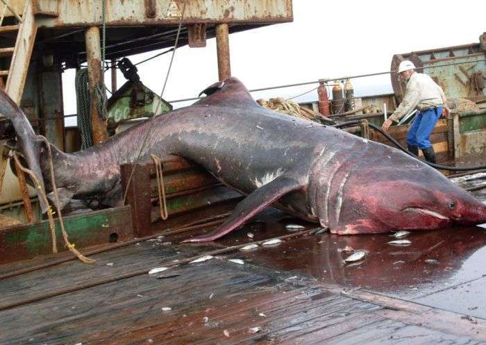 Екзотичний улов в мережах риболовного траулера (8 фото)