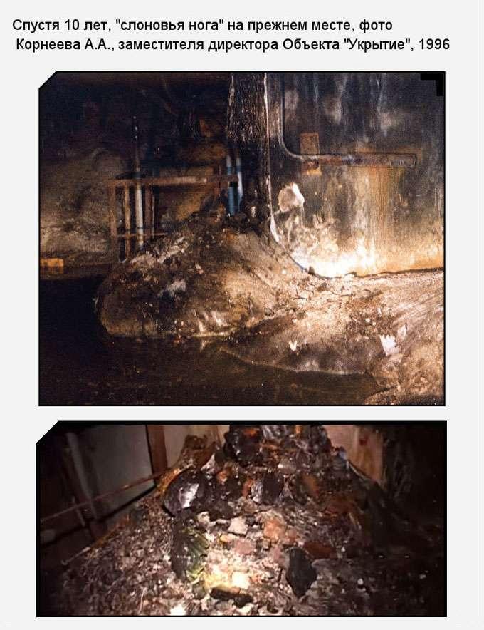 «Слонова нога» в зоні відчуження Чорнобильської АЕС (11 фото)