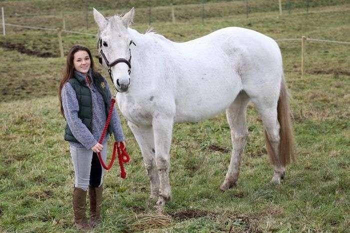 Порятунок коня по кличці Фоксі (5 фото)