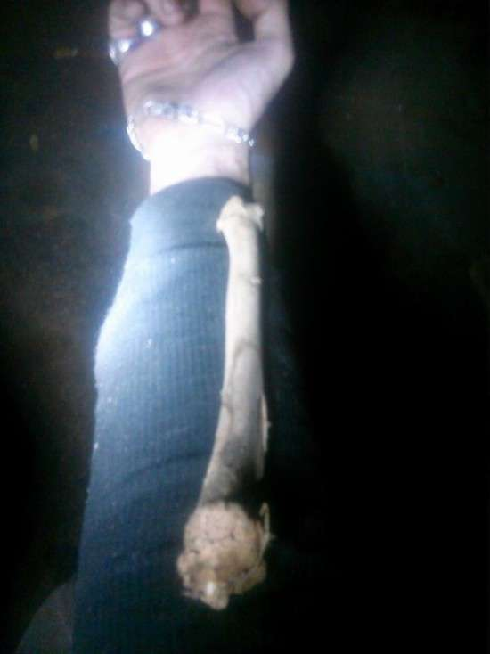 Дослідження кісток, знайдених у підвалі будинку (4 фото)
