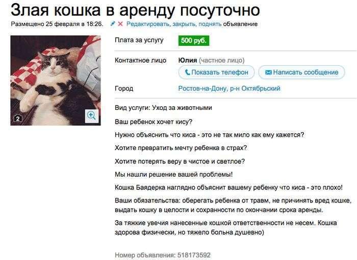Оренда злий кішки, яка відібє бажання заводити домашню тварину (7 скріншотів)